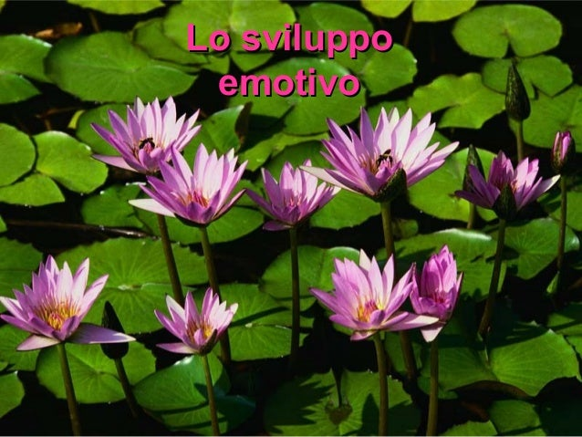 Emozioni2