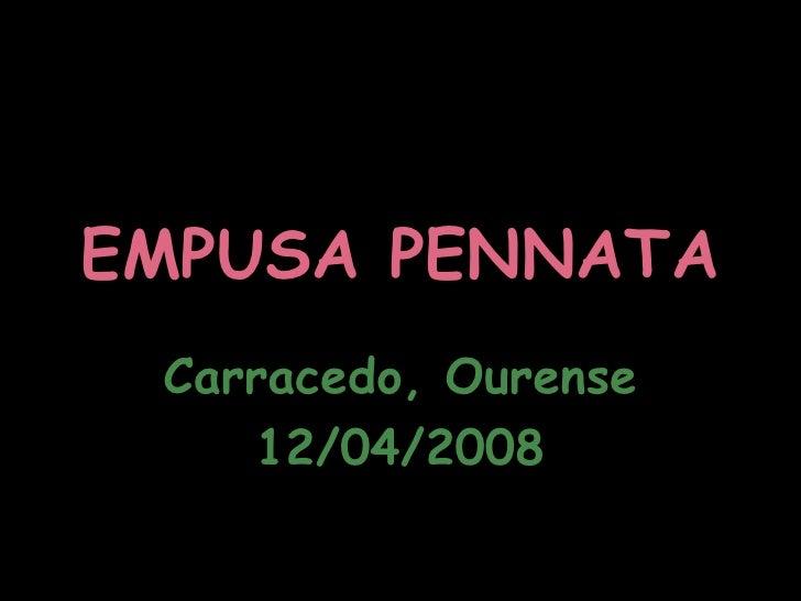 EMPUSA PENNATA Carracedo, Ourense 12/04/2008