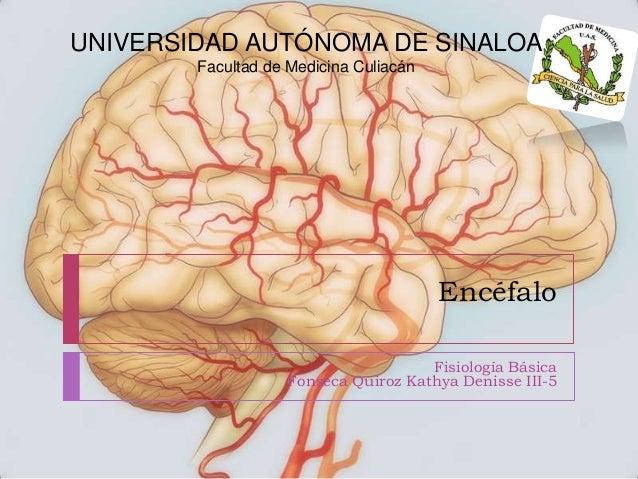 UNIVERSIDAD AUTÓNOMA DE SINALOA Facultad de Medicina Culiacán  Encéfalo Fisiología Básica Fonseca Quiroz Kathya Denisse II...