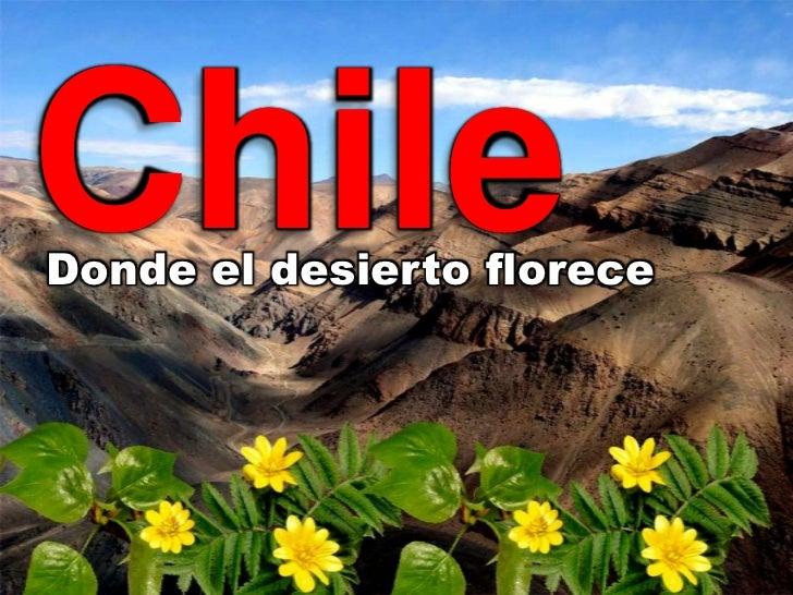 ChileDonde el desierto florece
