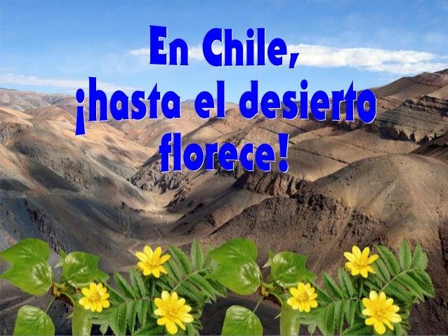 En el desierto de Atacama, el más árido del mundo, ubicado al norte de Chile, se produce un fenómeno climático espectacula...