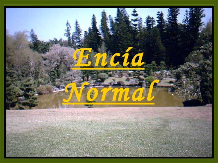 Encía Normal