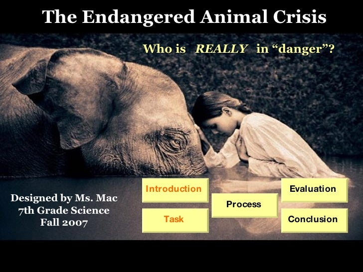 "Process Who is  REALLY  in ""danger""? The Endangered Animal Crisis Designed by Ms. Mac 7th Grade Science Fall 2007 Introduc..."