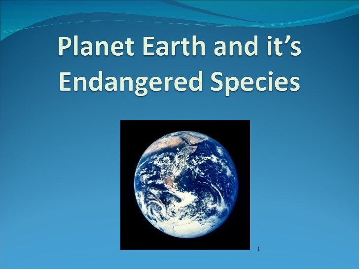 0647685 - Endangered Animals