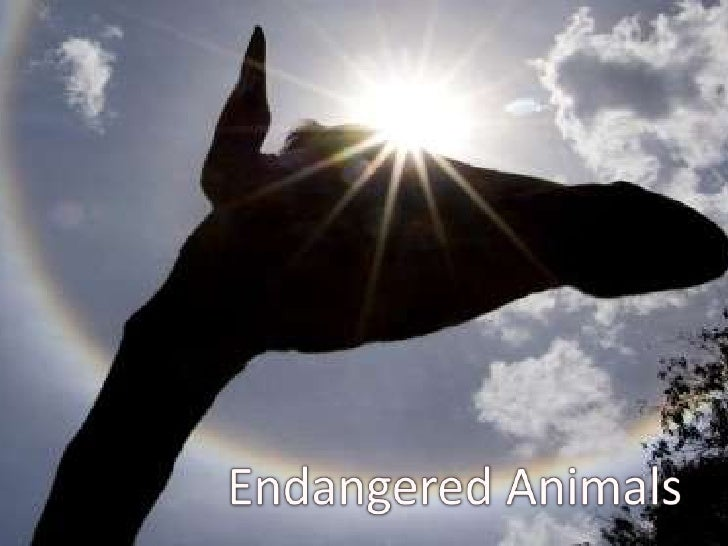 Endangered Animals<br />