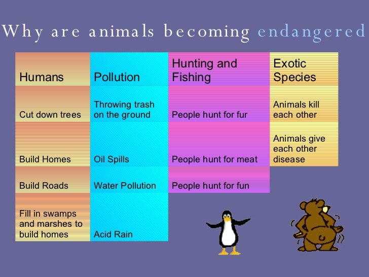endangered species should not be protected essay We certainly want to do our part to keep them from going extinct in order to  protect the ecosystem but you are just one person, so there is not anything you  can.