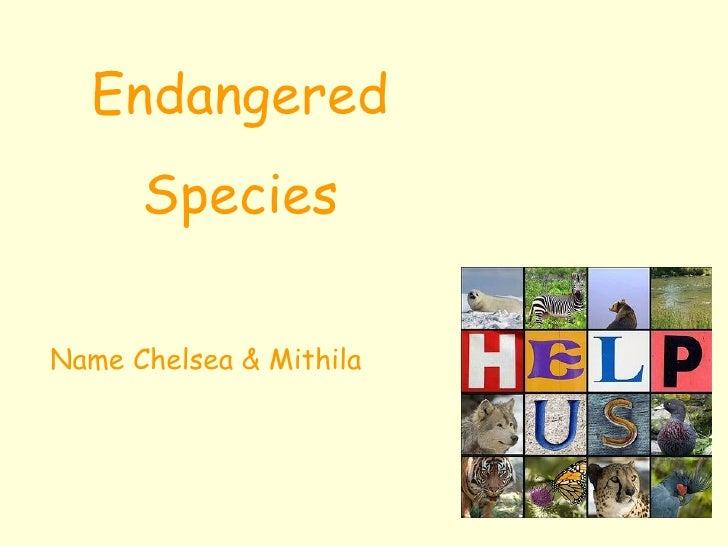 Endangered Species Name Chelsea & Mithila