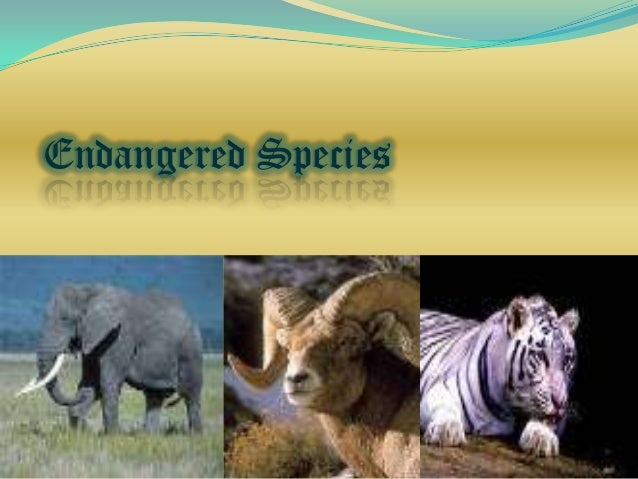 endangered animals essay endangered species direct essays endangered species essay
