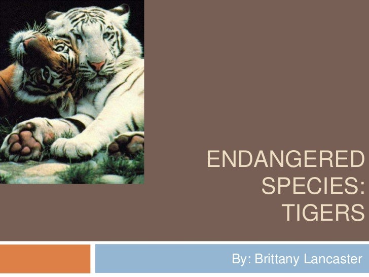 ENDANGERED   SPECIES:     TIGERS By: Brittany Lancaster
