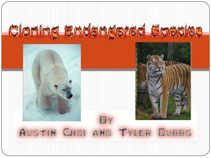 Endangered species cloning