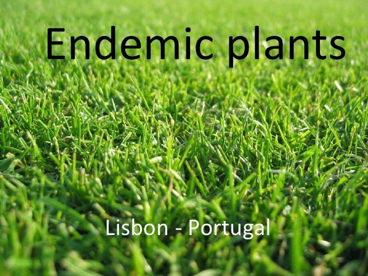 Endemic plants  Lisbon - Portugal