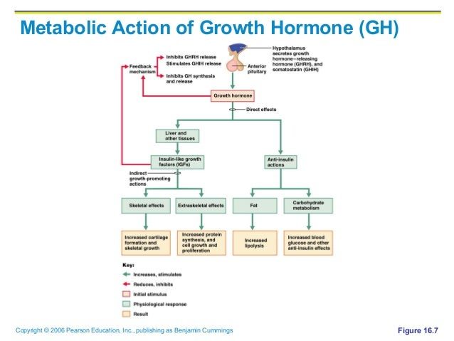metabolism of thyroid and steroid hormones