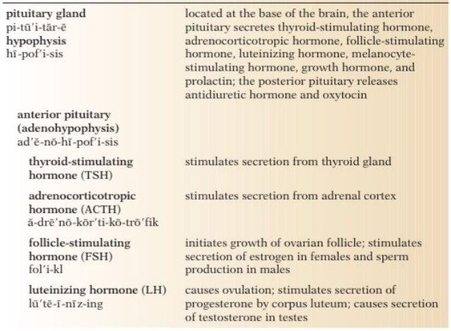 growth hormone regulation by melatonin and serotonin relationship