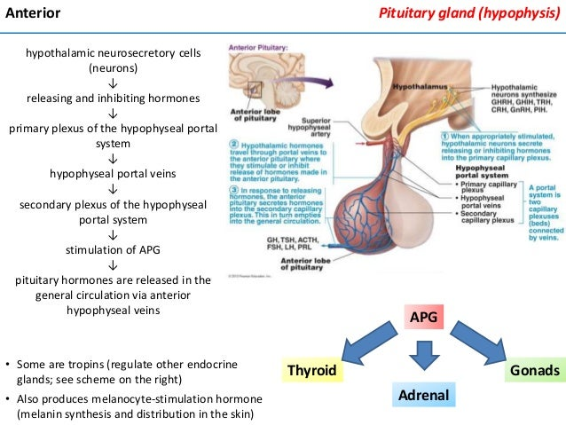 endocrine system of the rate essay Pth alters the rate at which magnesium  essay about endocrine system  the endocrine system i introduction endocrine system = endocrine glands .