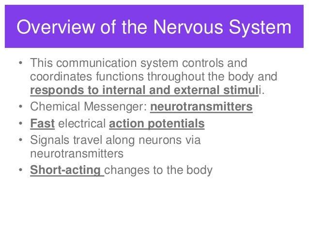 Central nervous system vs peripheral nervous system venn diagram central ccuart Images