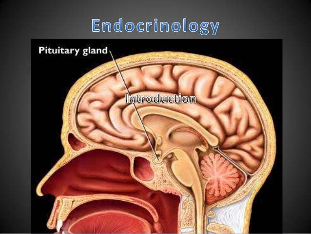 Major control systems of body        1. Nervous system       2. Endocrine system