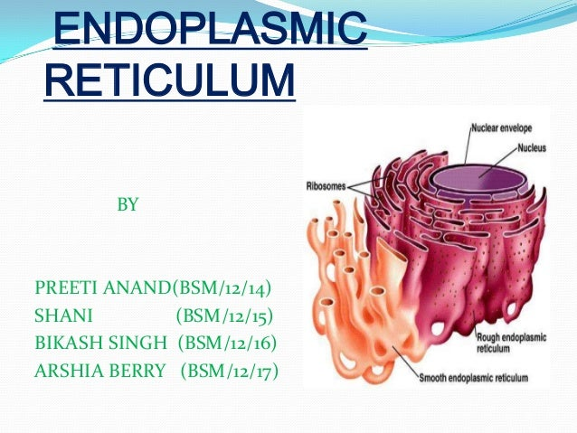 Endoplasmic reticulumWhat Is Endoplasmic Reticulum