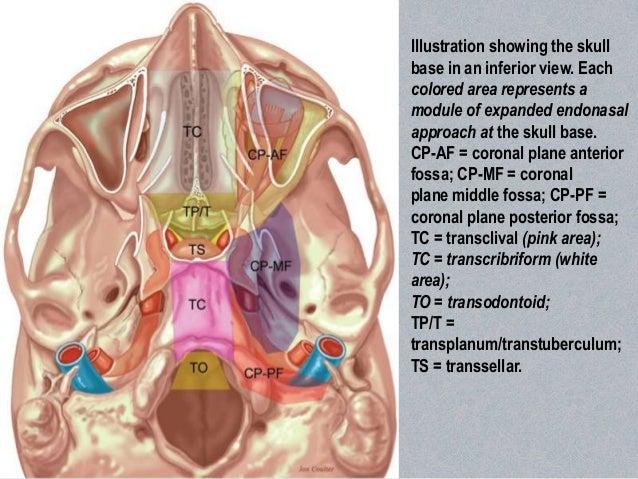 Endoscopic skull base anatomy