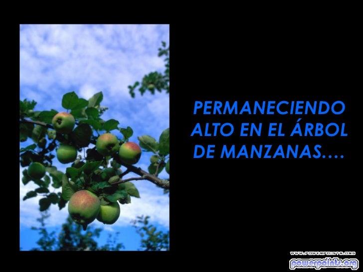 PERMANECIENDOALTO EN EL ÁRBOLDE MANZANAS.…