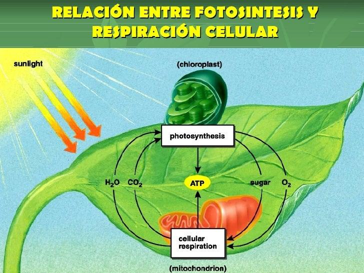 actividades anabolicas y catabolicas