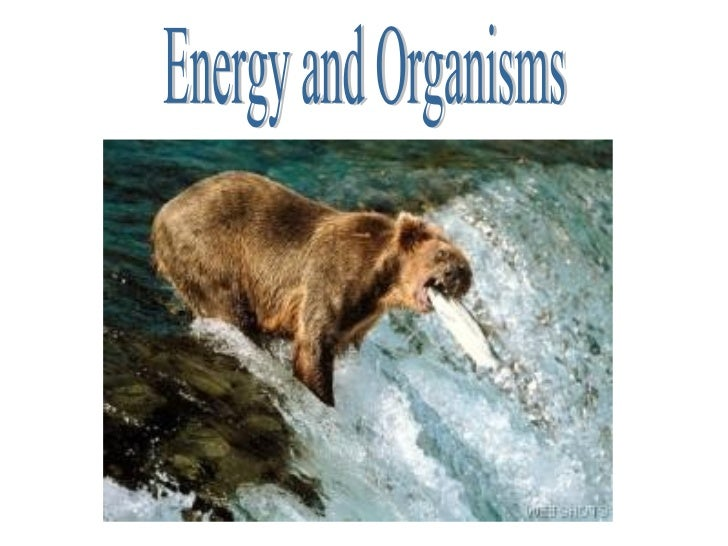 Energy and Organisms