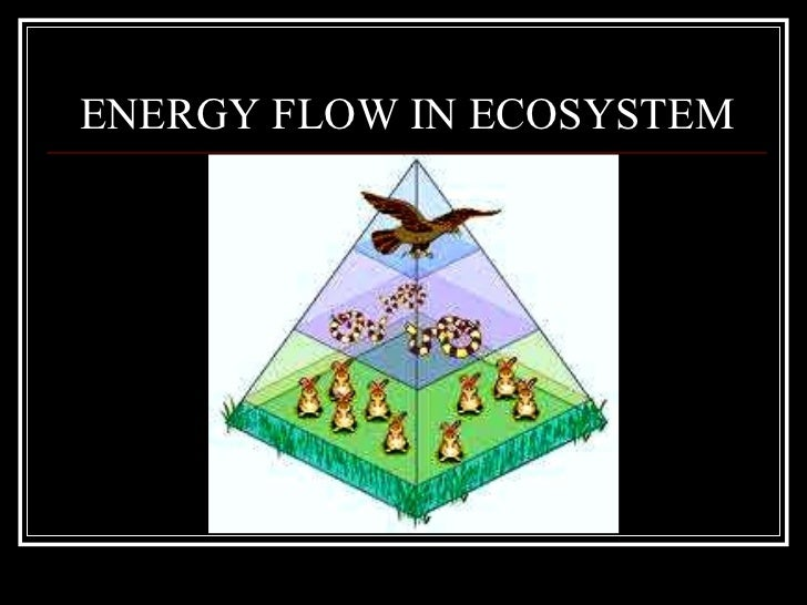 energy flow ecosystem Energy moves life the cycle of energy is based on the flow of energy through different trophic levels in an ecosystem our ecosystem is maintained by the cycling energy and nutrients obtained from different external sources at the first trophic level, primary producers use solar energy to produce.