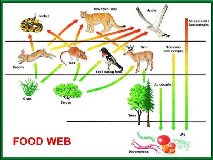Lion King  Topics The Environment Biology The Circle