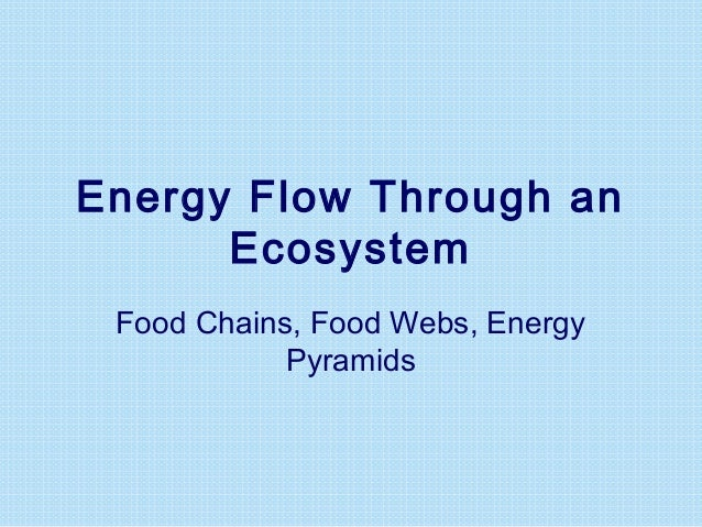 Energy Flow Through an Ecosystem Food Chains, Food Webs, Energy Pyramids