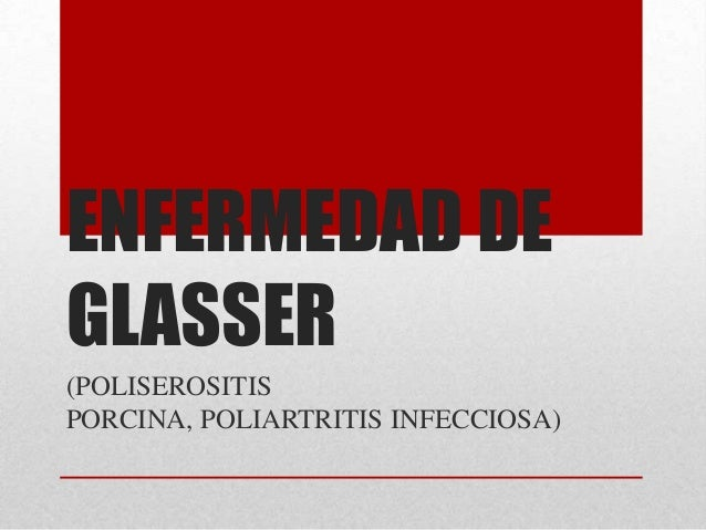 ENFERMEDAD DE GLASSER (POLISEROSITIS PORCINA, POLIARTRITIS INFECCIOSA)