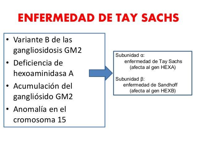 • Variante B de las gangliosidosis GM2 • Deficiencia de hexoaminidasa A • Acumulación del gangliósido GM2 • Anomalía en el...