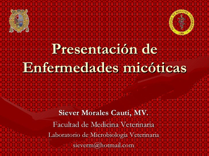 Presentación de Enfermedades micóticas Siever Morales Cauti, MV. Facultad de Medicina Veterinaria Laboratorio de Microbiol...