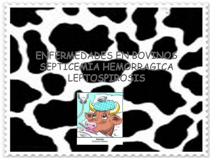 ENFERMEDADES EN BOVINOSSEPTICEMIA HEMORRAGICALEPTOSPIROSIS<br />