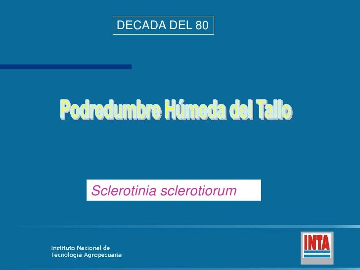 DECADA DEL 80<br />Podredumbre Húmeda del Tallo<br />Sclerotinia sclerotiorum<br />