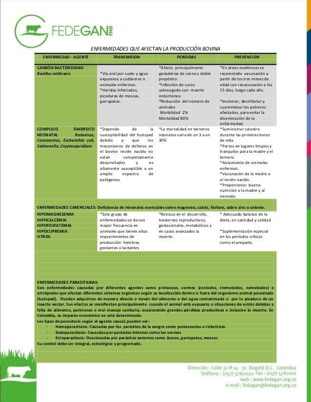 Fedegan_Animal_Ganadero_Enfermedades_ Afectan_Producción_Bovina_Colombia