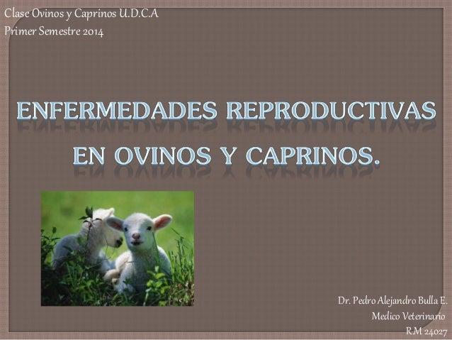 Dr. Pedro Alejandro Bulla E. Medico Veterinario R.M 24027 Clase Ovinos y Caprinos U.D.C.A Primer Semestre 2014