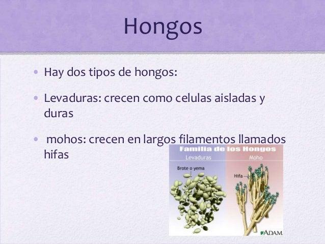Enfermedades x hongos - Tipos de hongos en la pared ...