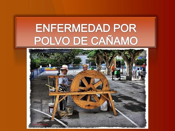 ENFERMEDAD POR POLVO DE CAÑAMO<br />