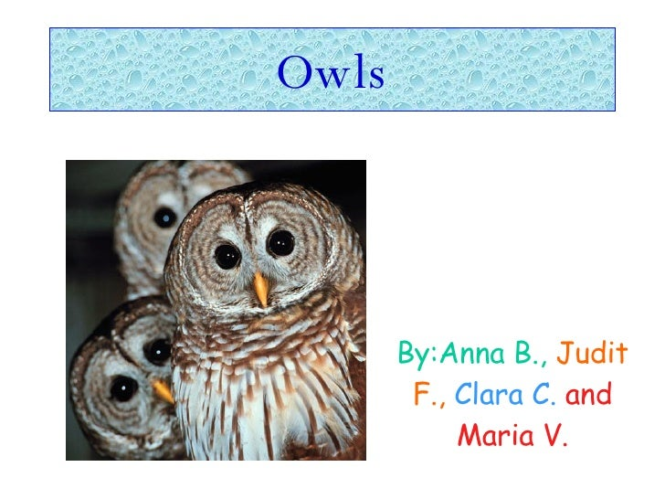 Owls By:Anna B.,   Judit F.,   Clara C.   and Maria V.