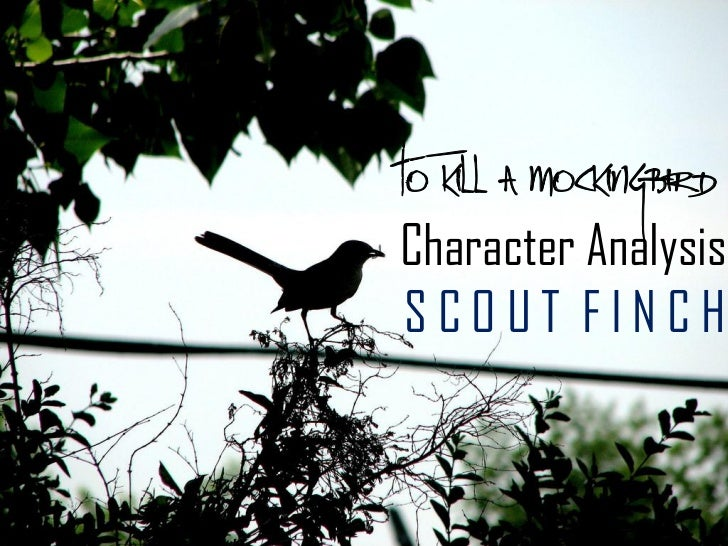 scout finch character analysis essay Atticus finch is a defense lawyer for maycomb countyhe's also the honorable father of main character scout and jem he is the lawyer for accused black rapist tom.