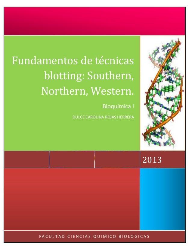 Fundamentos de técnicas blotting: Southern, Northern, Western. Bioquímica I DULCE CAROLINA ROJAS HERRERA  2013  FACULTAD C...