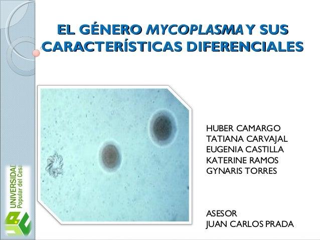 EL GÉNERO MYCOPLASMA Y SUS CARACTERÍSTICAS DIFERENCIALES  HUBER CAMARGO TATIANA CARVAJAL EUGENIA CASTILLA KATERINE RAMOS G...