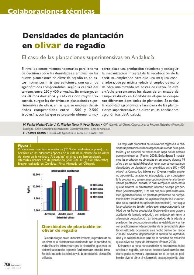 Septiembre06 Agricultura 708 Colaboraciones técnicas Densidades de plantación en olivar de regadío Cuando el agua no es un...