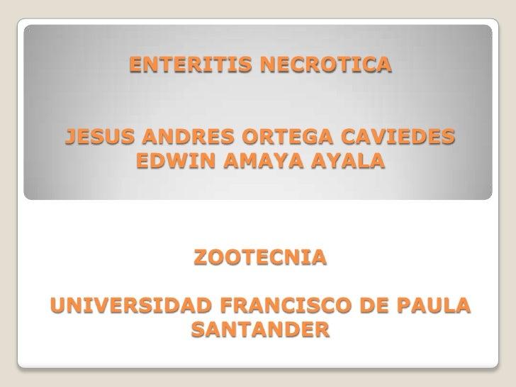 ENTERITIS NECROTICAJESUS ANDRES ORTEGA CAVIEDESEDWIN AMAYA AYALAZOOTECNIAUNIVERSIDAD FRANCISCO DE PAULA SANTANDER<br />