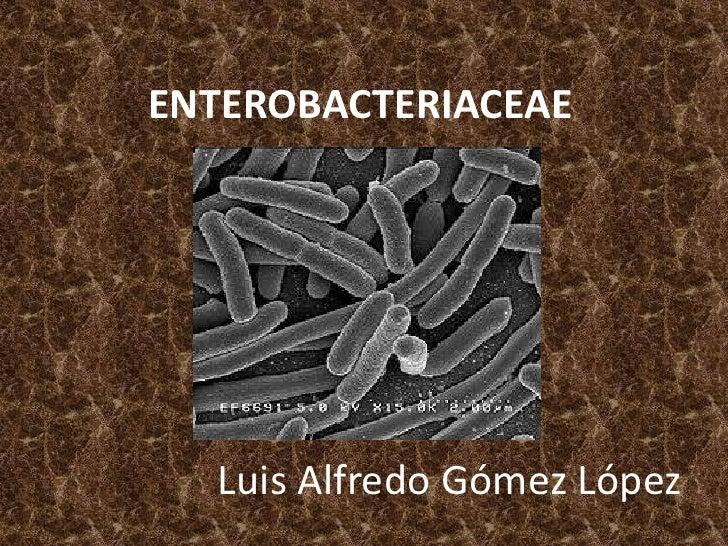 ENTEROBACTERIACEAE<br />Luis Alfredo Gómez López<br />