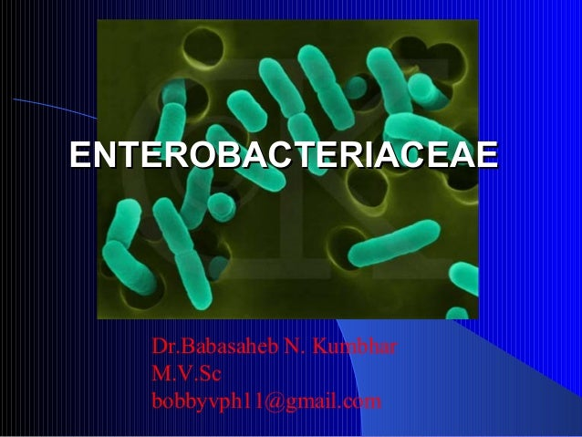 Dr.Babasaheb N. Kumbhar M.V.Sc bobbyvph11@gmail.com ENTEROBACTERIACEAEENTEROBACTERIACEAE