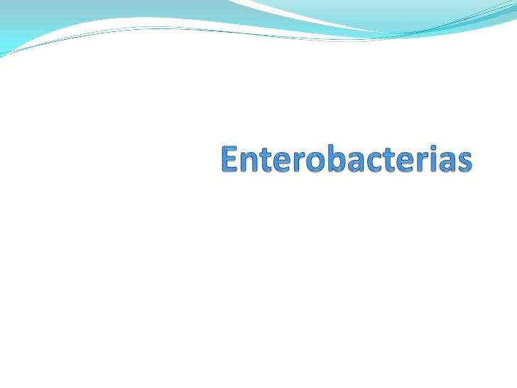  MORFOLÓGICAS Y TINTORIALES  Bacilos o cocobacilos cortos gram negativos,  no esporulados,  mótiles (flagelos perítric...