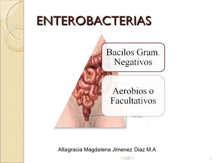 ENTEROBACTERIAS 11/20/11 Altagracia Magdalena Jimenez Diaz M.A