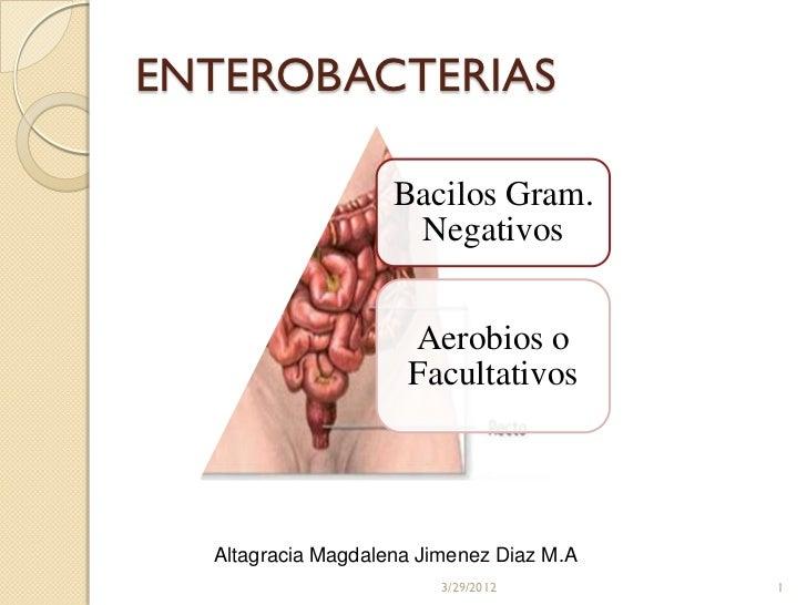 ENTEROBACTERIAS                    Bacilos Gram.                     Negativos                     Aerobios o             ...