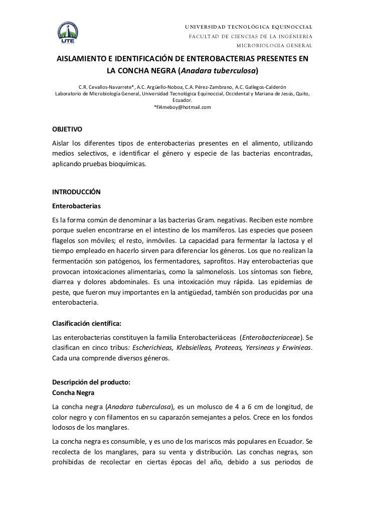 AISLAMIENTO E IDENTIFICACIÓN DE ENTEROBACTERIAS PRESENTES EN LA CONCHA NEGRA (ANDARA TUBERCULOSA)