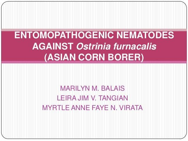 MARILYN M. BALAIS LEIRA JIM V. TANGIAN MYRTLE ANNE FAYE N. VIRATA ENTOMOPATHOGENIC NEMATODES AGAINST Ostrinia furnacalis (...